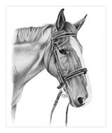 Pencil Pet Portraits. Dog Portrait, Cat Portrait, Horse Portrait, Atlanta