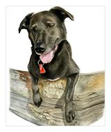 Watercolor Pet Portraits, dog portrait, cat portrait, horse portrait, Atlanta