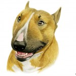 Bull Terrier portrait in watercolor
